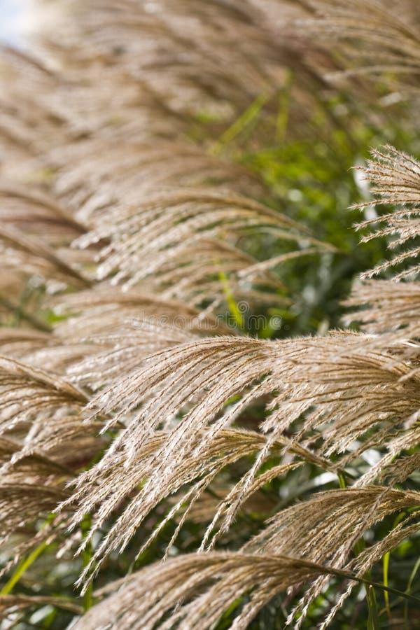 травы стоковые фото