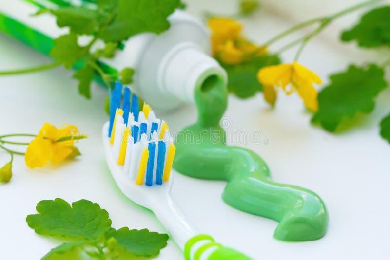 Травяная зубная паста и зубная щетка стоковая фотография rf