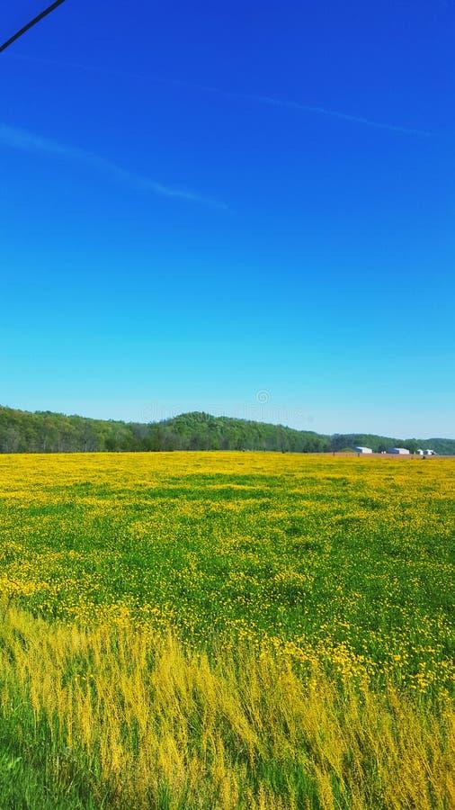 Травянистое поле в голубом небе и белых облаках стоковые изображения rf