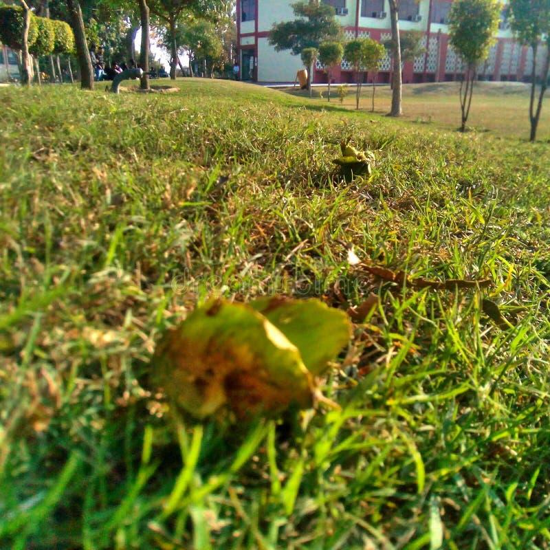 травянисто стоковая фотография rf