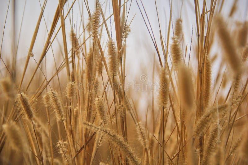 травянисто стоковое изображение rf