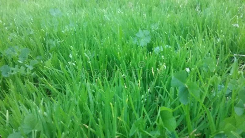 травянисто стоковые фотографии rf