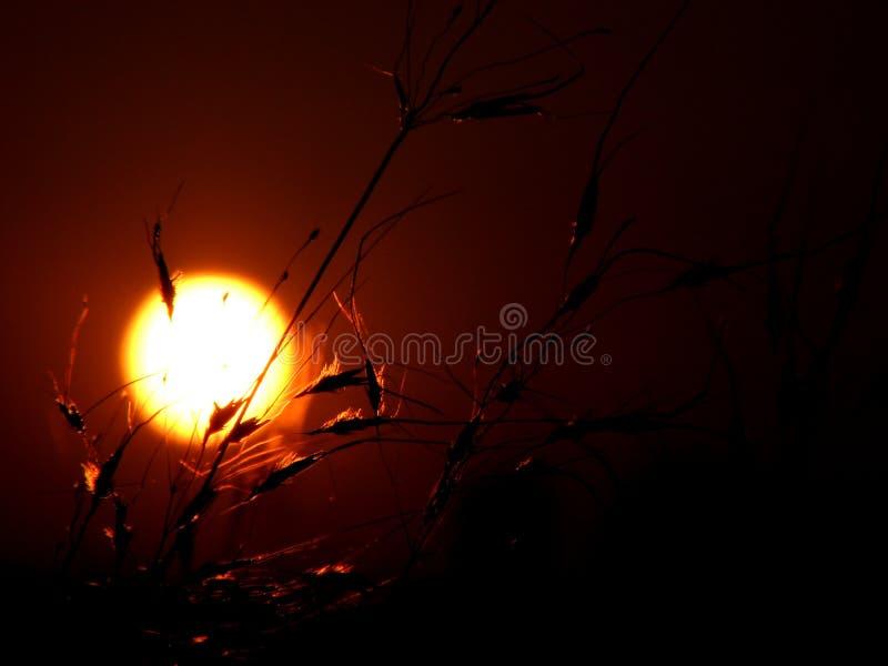 травянистый заход солнца стоковое изображение rf