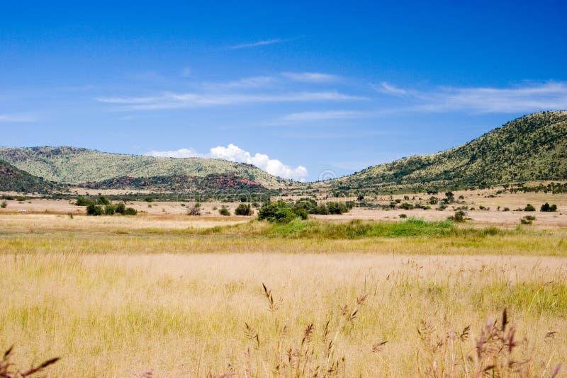 травянистый ландшафт стоковые изображения rf