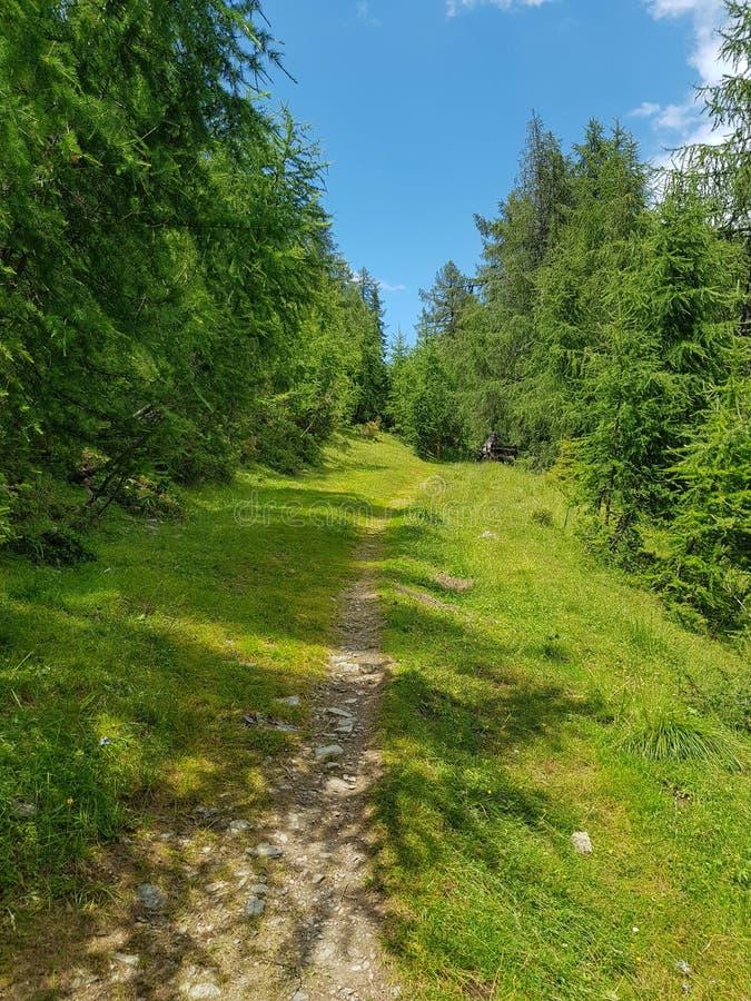 Травянистый пеший путь внутри alpen горы стоковое изображение