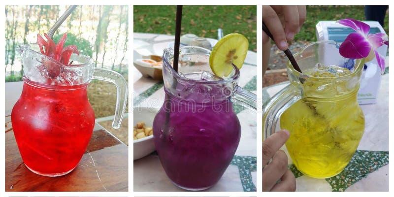 Травяное питье стоковые изображения rf