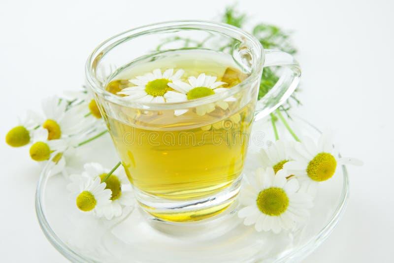Травяной чай с свежим стоцветом стоковые изображения