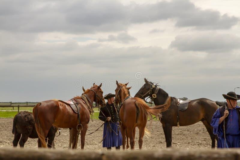 Традиционный венгерский ковбой в Puszta стоковое изображение rf