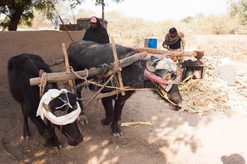 Традиционный путь делать сахар в Пакистане стоковое фото rf