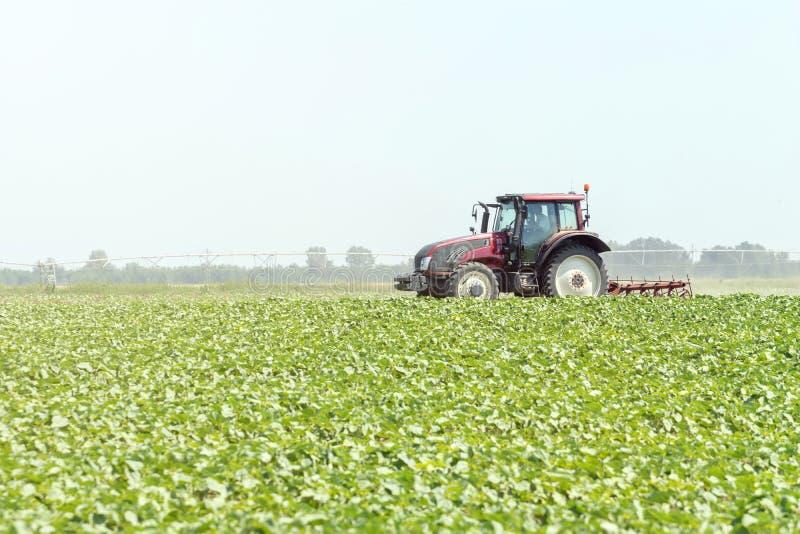 Трактор в зеленом поле Машина земледелия стоковые фото