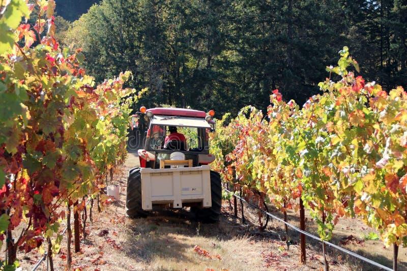 Трактор в строке виноградника стоковая фотография rf