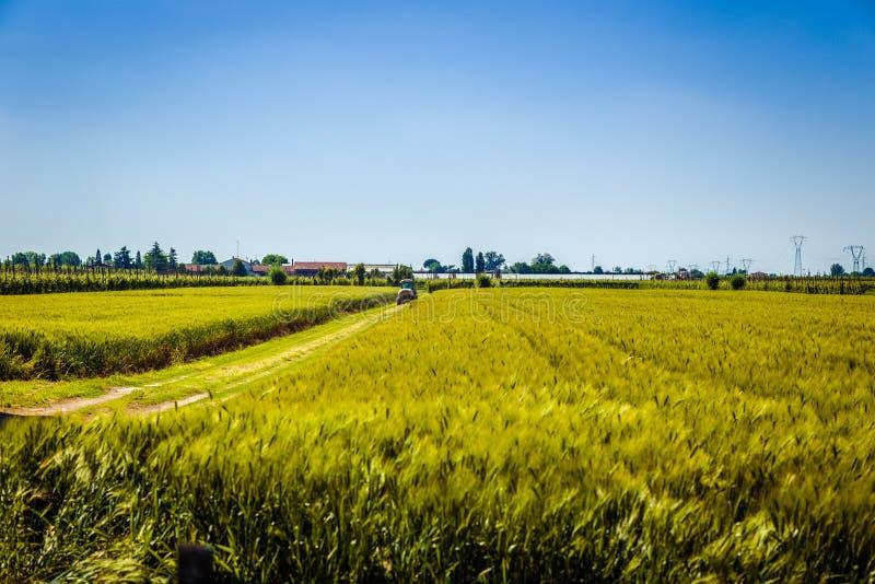 Трактор на пшеничных полях стоковые изображения