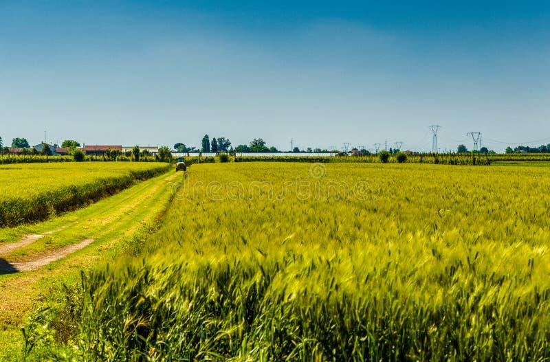 Трактор на пшеничных полях стоковое изображение rf