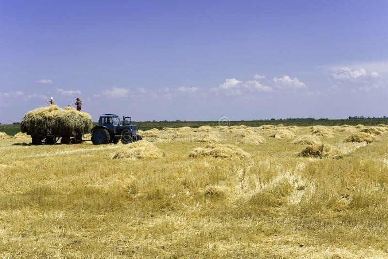 трактор поля стоковое фото rf