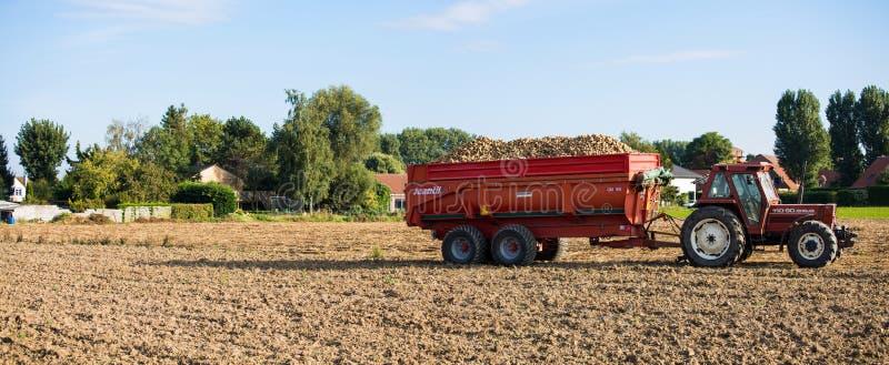 Трактор с сбросом полным картошек стоковая фотография rf