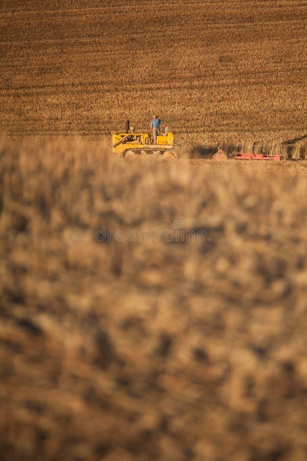 Трактор фермера вспахивая поле стерни пшеницы и культивировать, земледелие стоковые фото