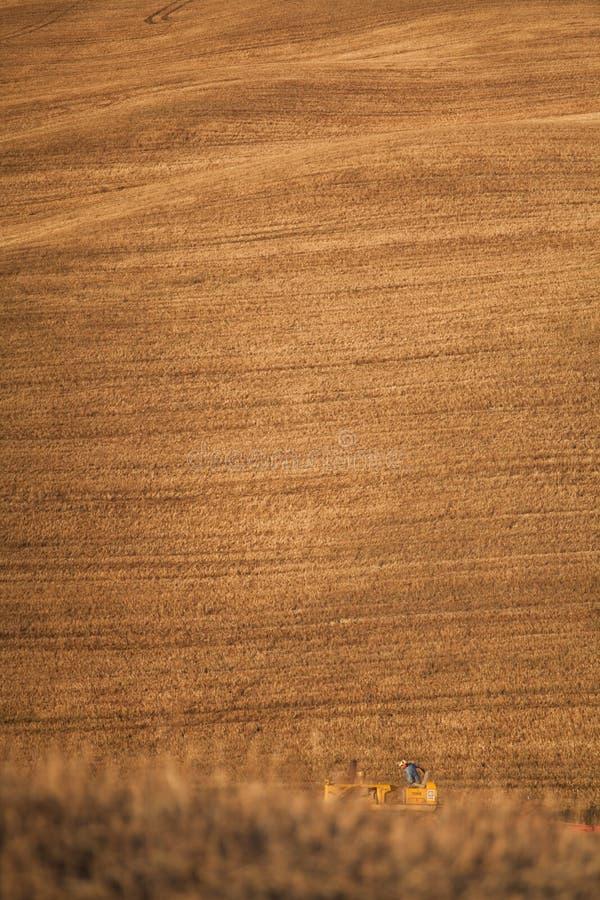 Трактор фермера вспахивая поле стерни пшеницы и культивировать, земледелие стоковые изображения