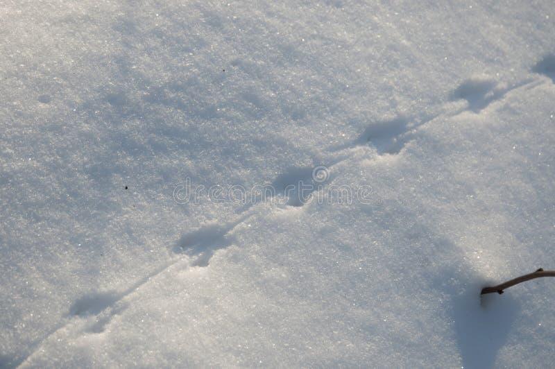 следы мыши на снегу фото святой варвары выглядел