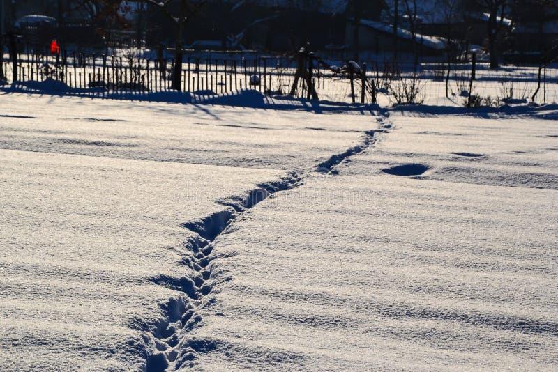 Трассировки лапок ` s кота в сугробах на день зимы солнечный, Беларуси стоковые изображения rf