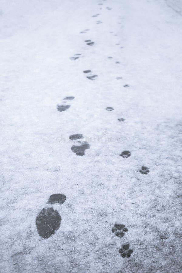 Трассировки человека и его собаки в снеге стоковые изображения rf