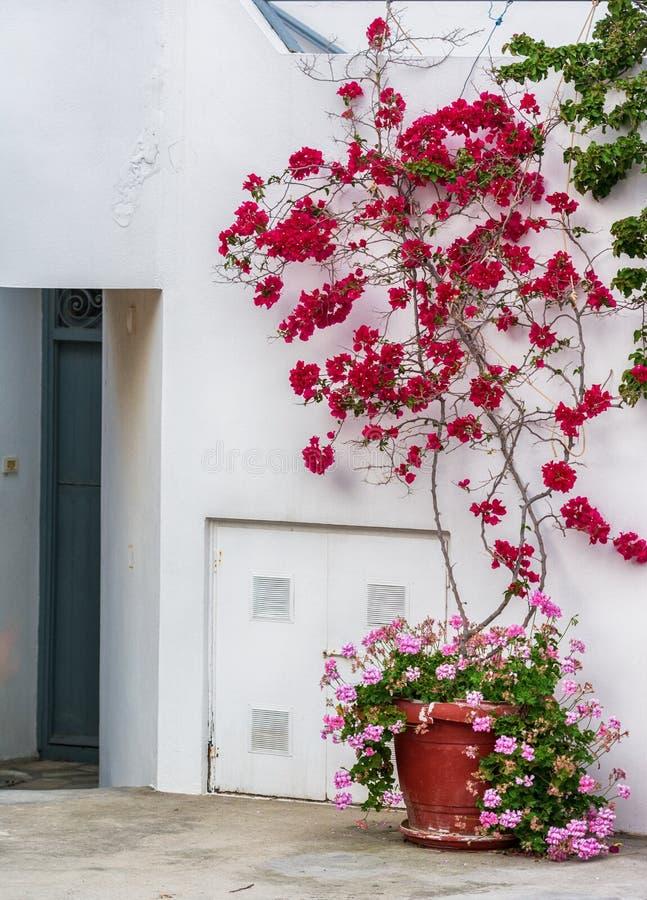 Традиционная греческая деревня с бугинвилией цветет на острове Milos стоковая фотография