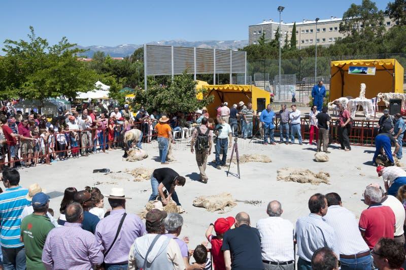 Традиционные режа овцы стоковое фото