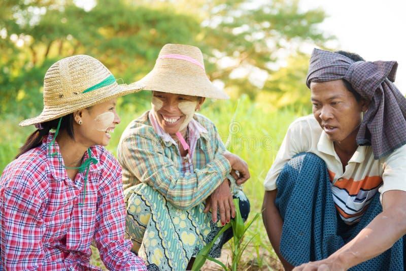 Традиционные фермеры Мьянмы стоковые фотографии rf