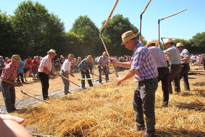 Традиционный французский побеждать пшеницы стоковое изображение rf