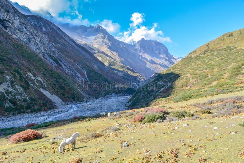 Трек цепи Annapurna, Letdar Manang - зона Annapurna, Непал стоковые фотографии rf