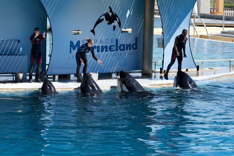 Тренеры кита стоковое фото rf