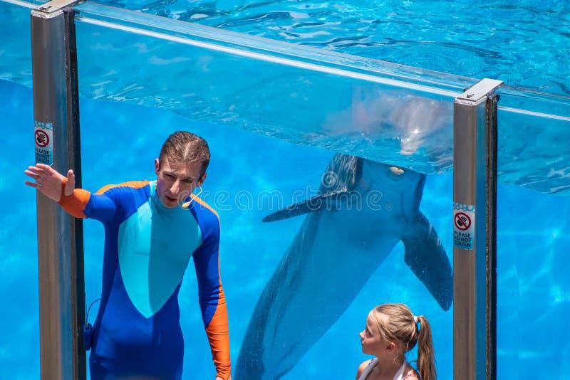 Тренер показывает дельфину как сказать здравствуйте дозоры маленькой девочки промежутка времени на Seaworld стоковое изображение rf