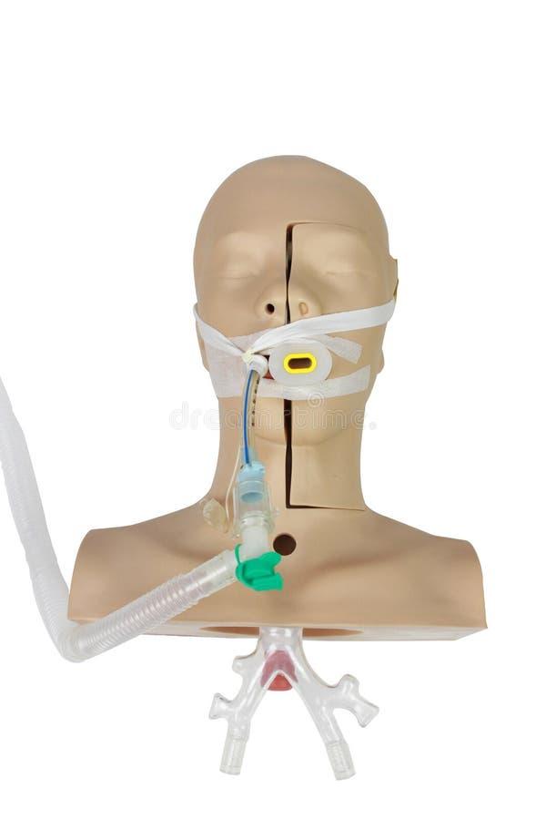 Тренировка имитации взгляда высокого угла медицинская трахеального intubati стоковые изображения rf
