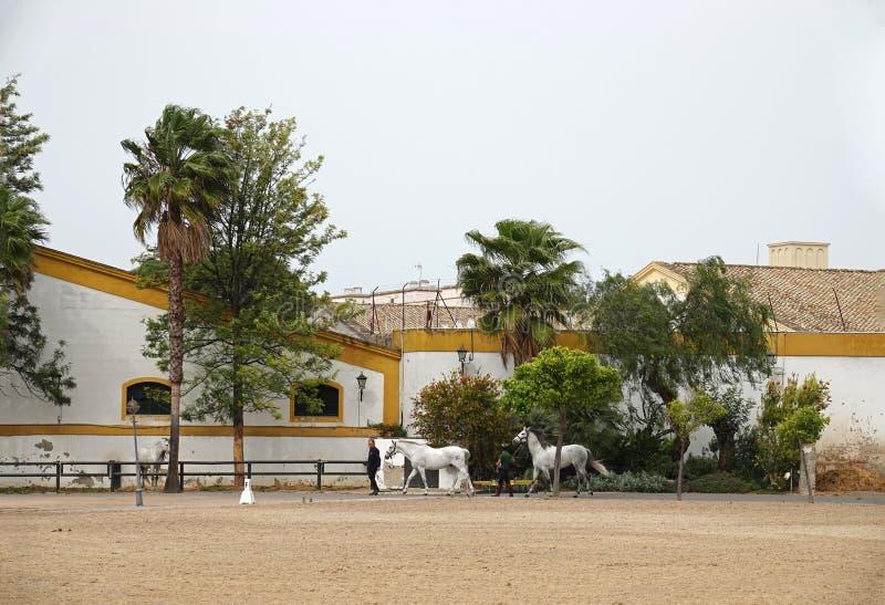 Тренировка лошади в королевской андалузской школе конноспортивного искусства в Ла Flontera Jerez стоковое фото