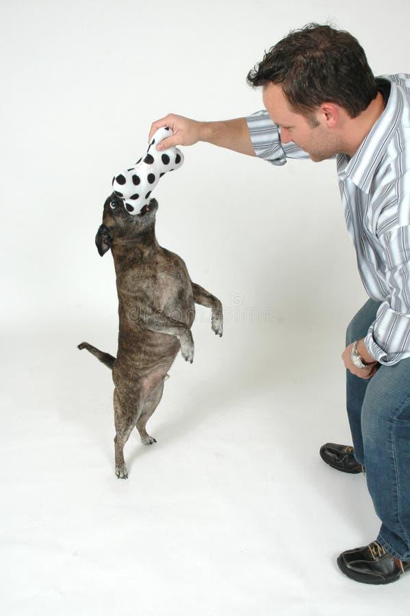 тренировка любимчика стоковое фото
