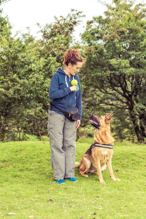 Тренировка собаки идя стоковые изображения rf