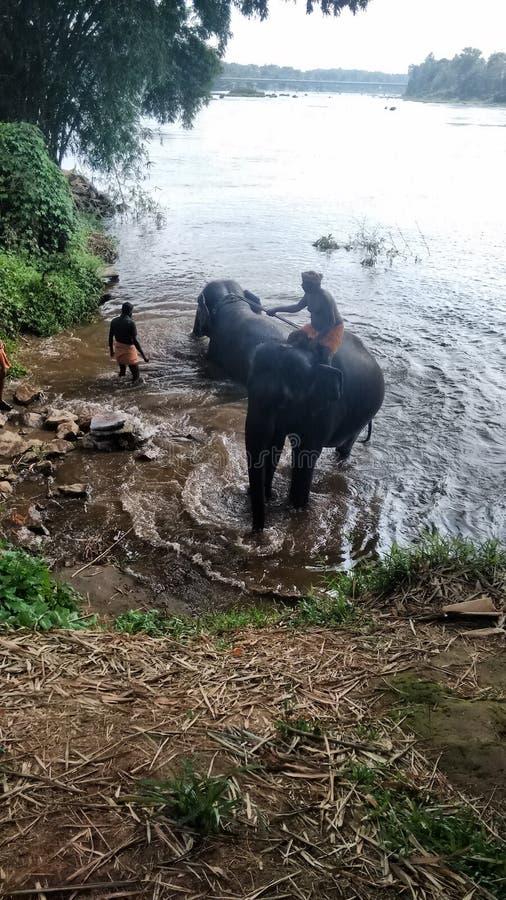 Тренировка слона стоковое изображение