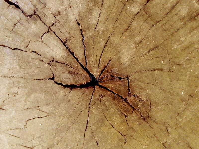 Треснутая выдержанная пнем деревянная предпосылка текстуры brougham иллюстрация вектора