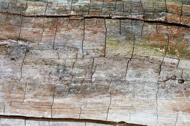 треснутая древесина текстуры Красочная деревянная картина стоковое изображение