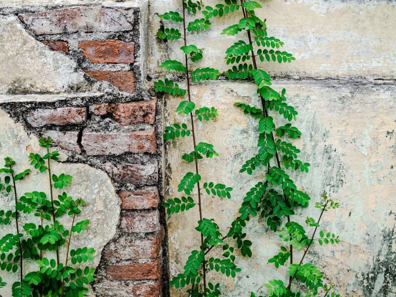 Треснутая стена цемента и растя засоритель стоковое фото rf