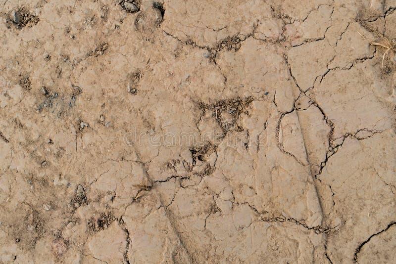 треснутый район неорошаемого земледелия стоковое фото