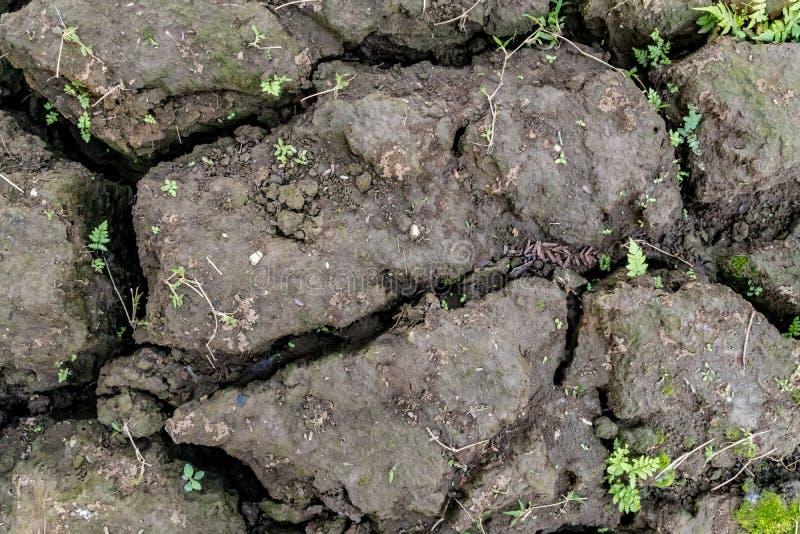 треснутый район неорошаемого земледелия стоковое изображение rf