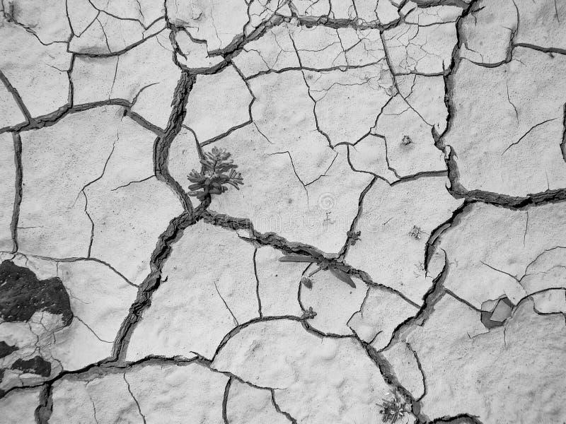 Треснутый суглинок жарой в пустыне стоковая фотография