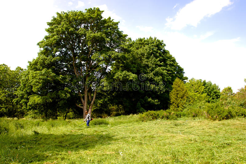 триммер лужайки ландшафта сельский стоковая фотография rf