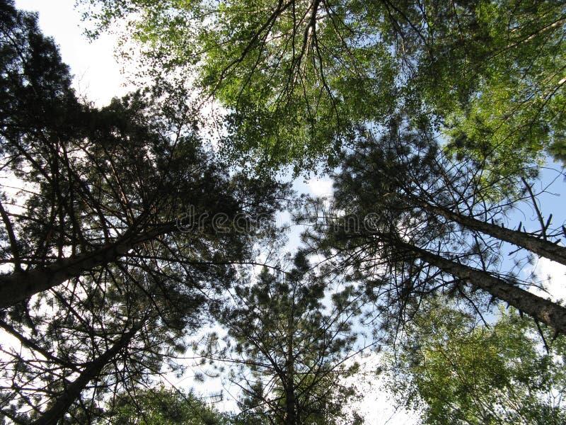 Трое в лесу, горы Дивсибаре стоковое фото rf