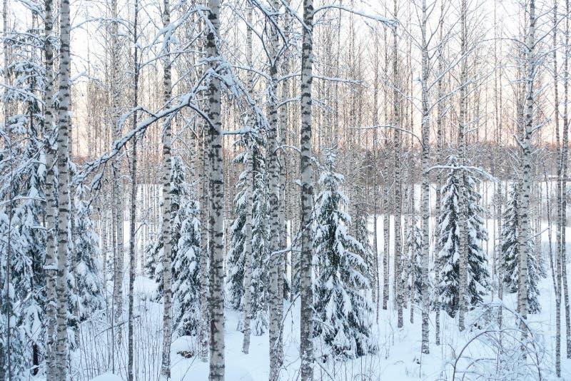 Тройники Snowy в ряд стоковое изображение