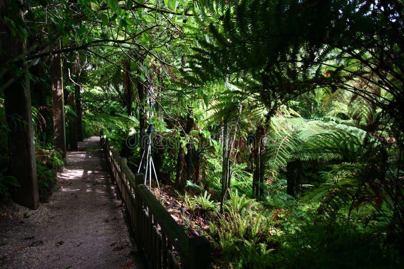 Тропа вдоль сада для папоротников стоковая фотография rf