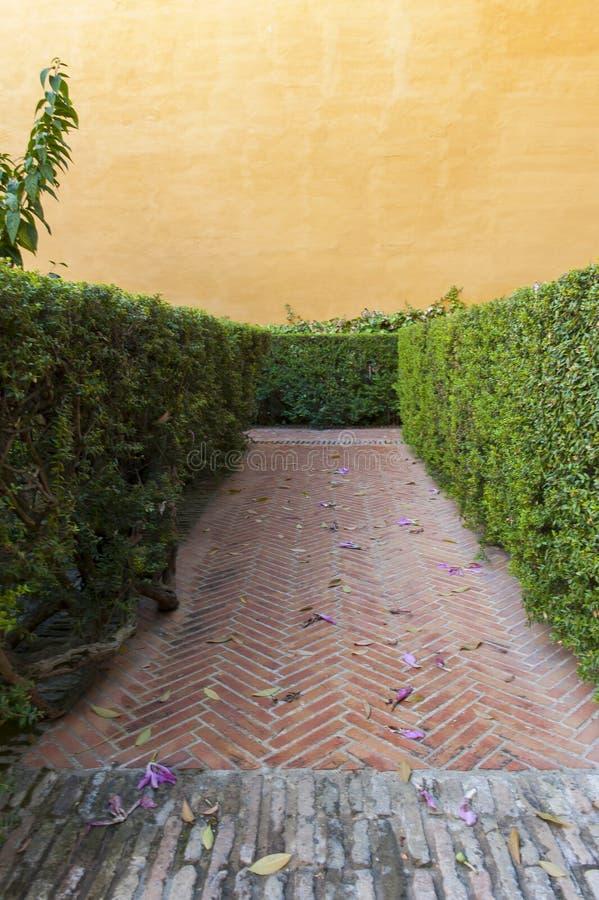 Тропа внутри лабиринта в саде с оранжевой стеной гипсолита стоковые изображения rf
