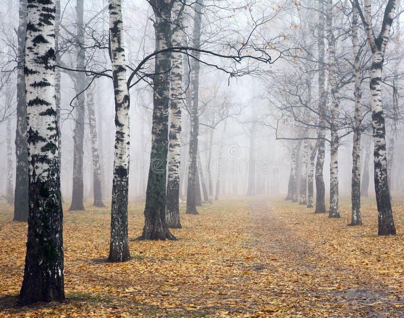 Тропа в глубоко парке березы осени тумана стоковая фотография