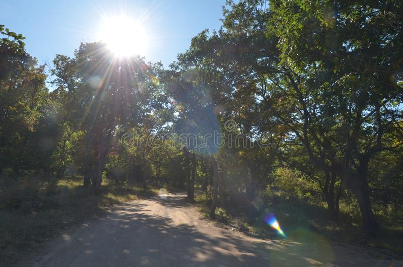 Тропа в лесе лета, пирофакел объектива стоковые фотографии rf