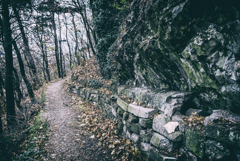 Тропа в лесе осени, Nitra, сетноой-аналогов фильтр стоковое изображение rf